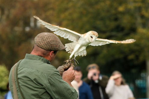 Ballet owl