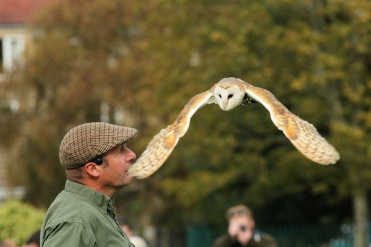 Graceful owl